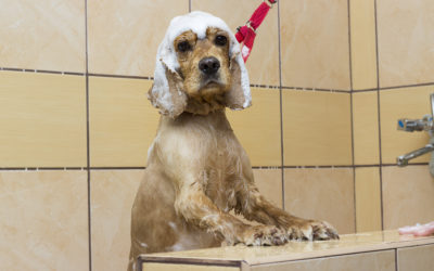 The Newest Trend in Home Hygiene – Dedicated Dog Showers!